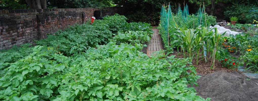 afton-liodge-veg-garden